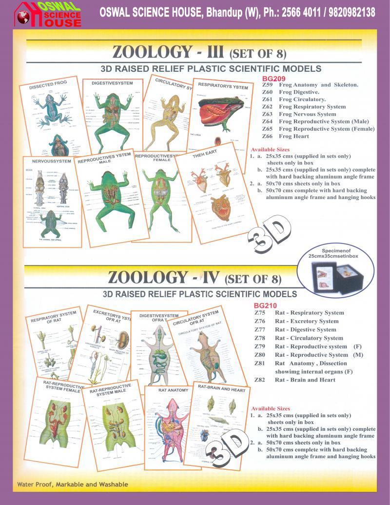 Lujo Rat Nervous System Anatomy Ilustración - Imágenes de Anatomía ...